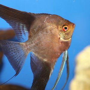 Aquarium in Varna
