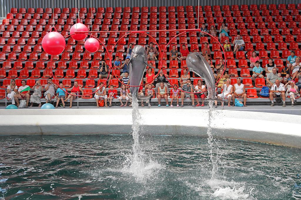 Dolphinarium-Varna