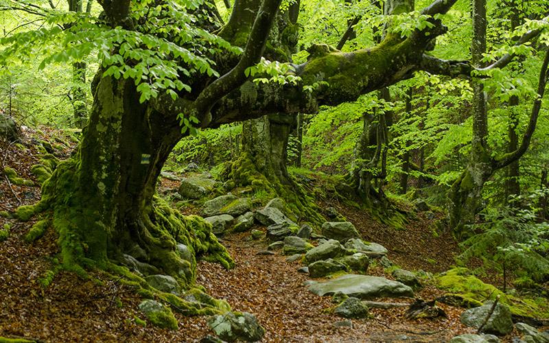 Satara Reka Reserve, Bulgaria