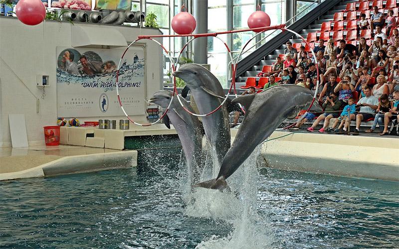 Festa Dolphinarium in Varna