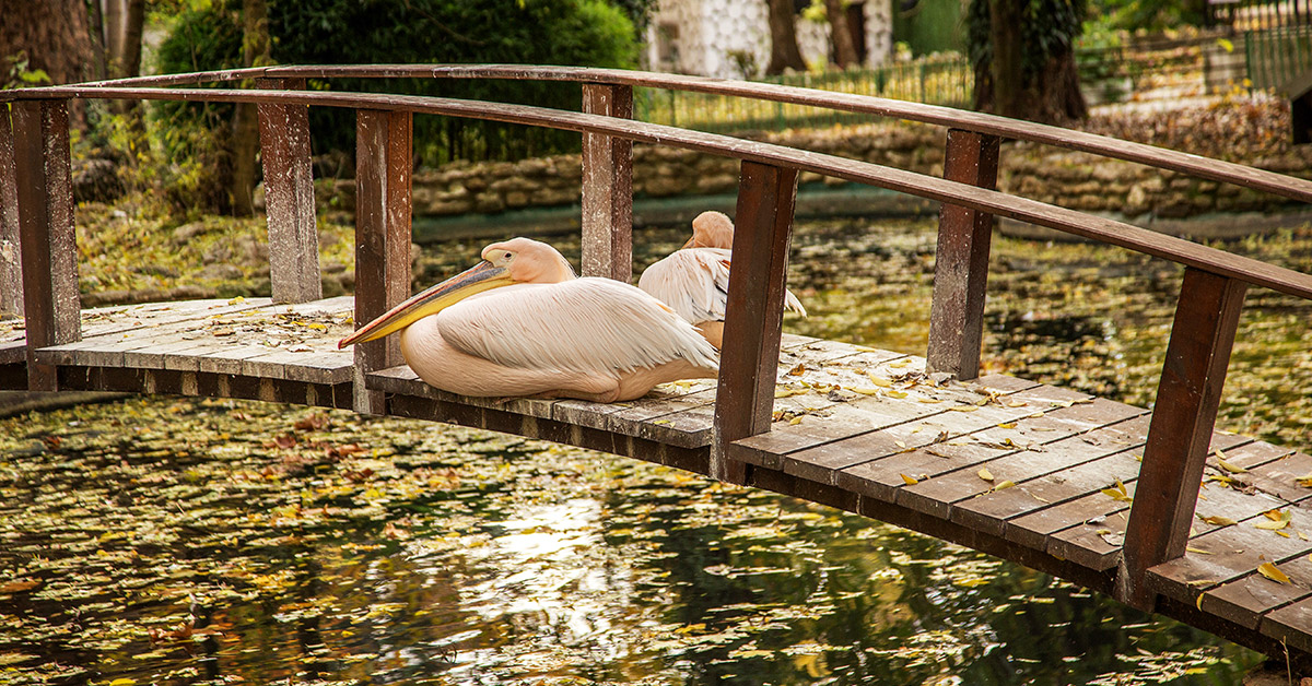 The Best Attractions In Varna's Sea Garden