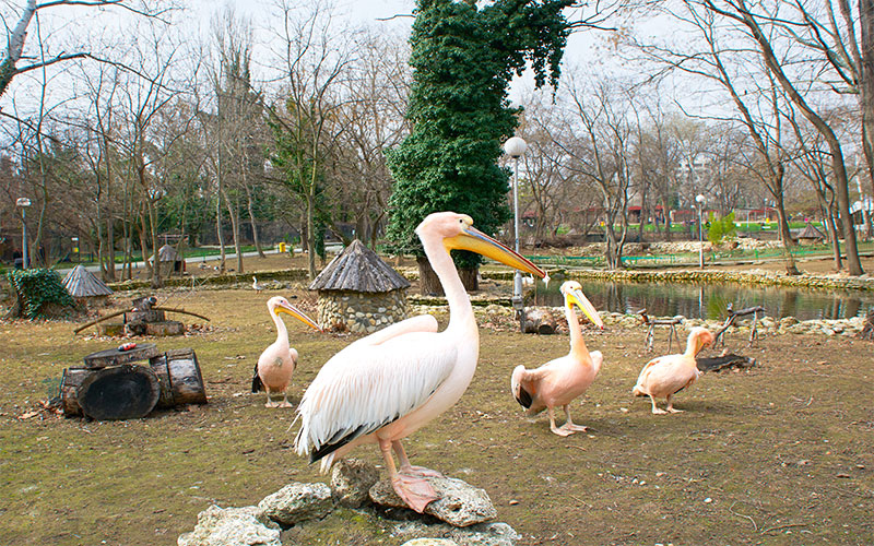 The Zoo in Varna
