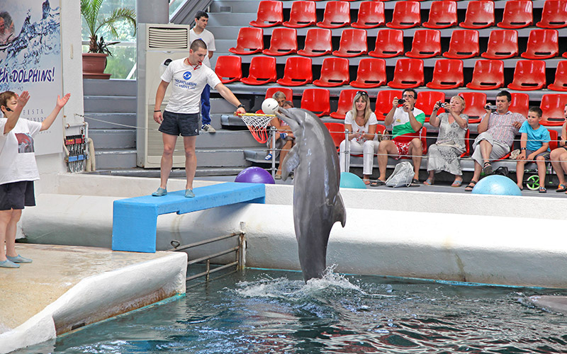 Festa Dolphinarium, Varna