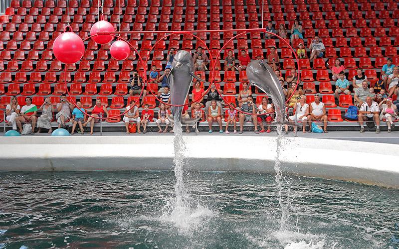 Варненският делфинариум