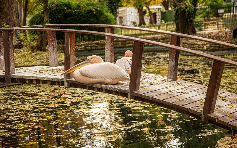 Varna Zoo