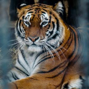Varna Zoo in Varna