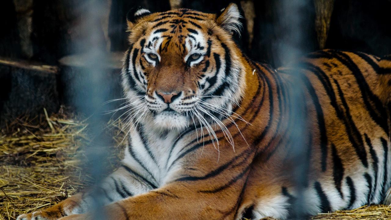 Зоопарк Варна във Варна