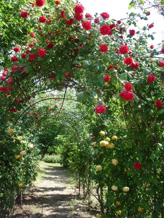 Университетски ботанически градини, Варна